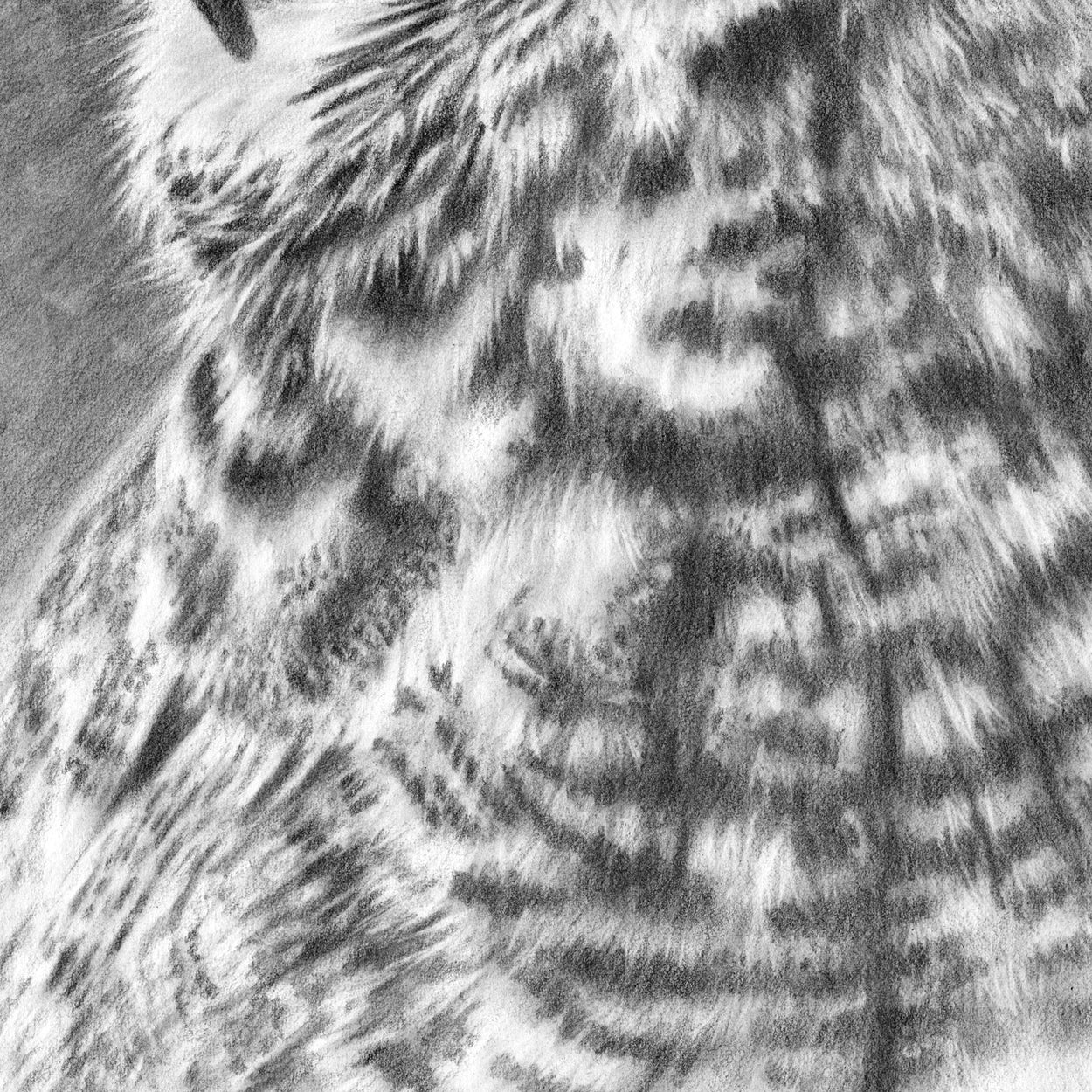 Great Horned Owl Drawing CLose-up 3 - The Thriving Wild