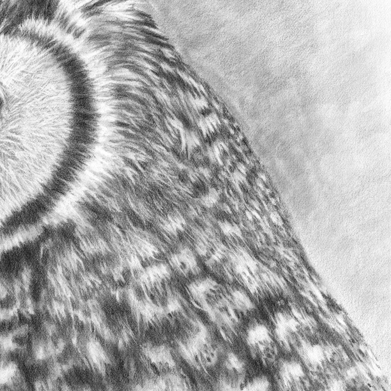 Great Horned Owl Drawing CLose-up 4 - The Thriving Wild