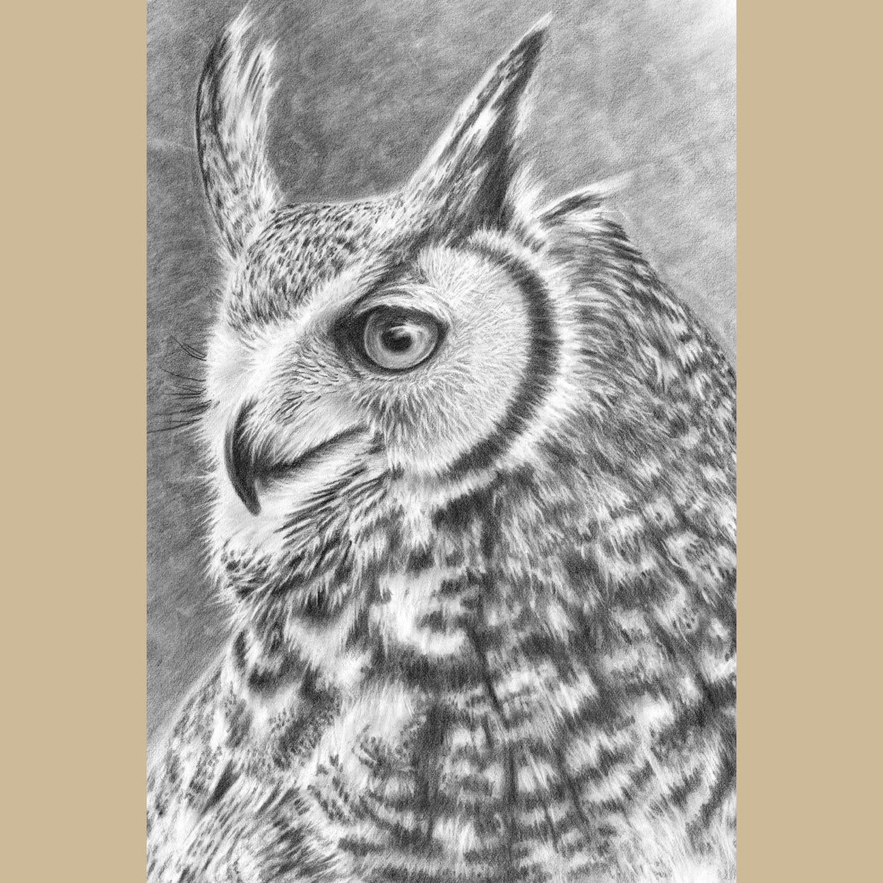 Great Horned Owl Drawing Close-up 1 - The Thriving Wild