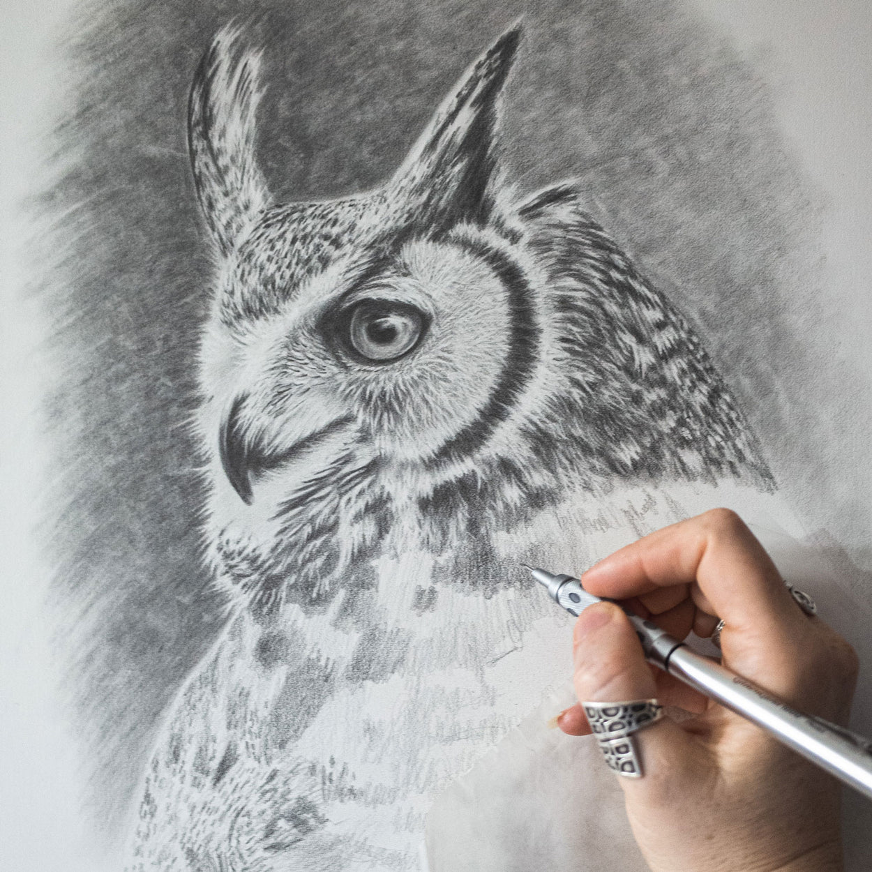 Great Horned Owl Drawing In Progress - The Thriving Wild - Jill Dimond