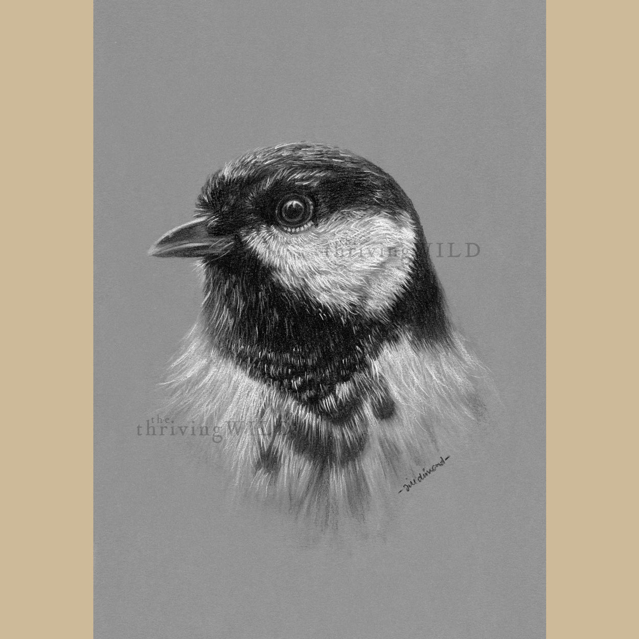 Great Tit Charcoal Drawing Garden Bird - The Thriving Wild - Jill Dimond