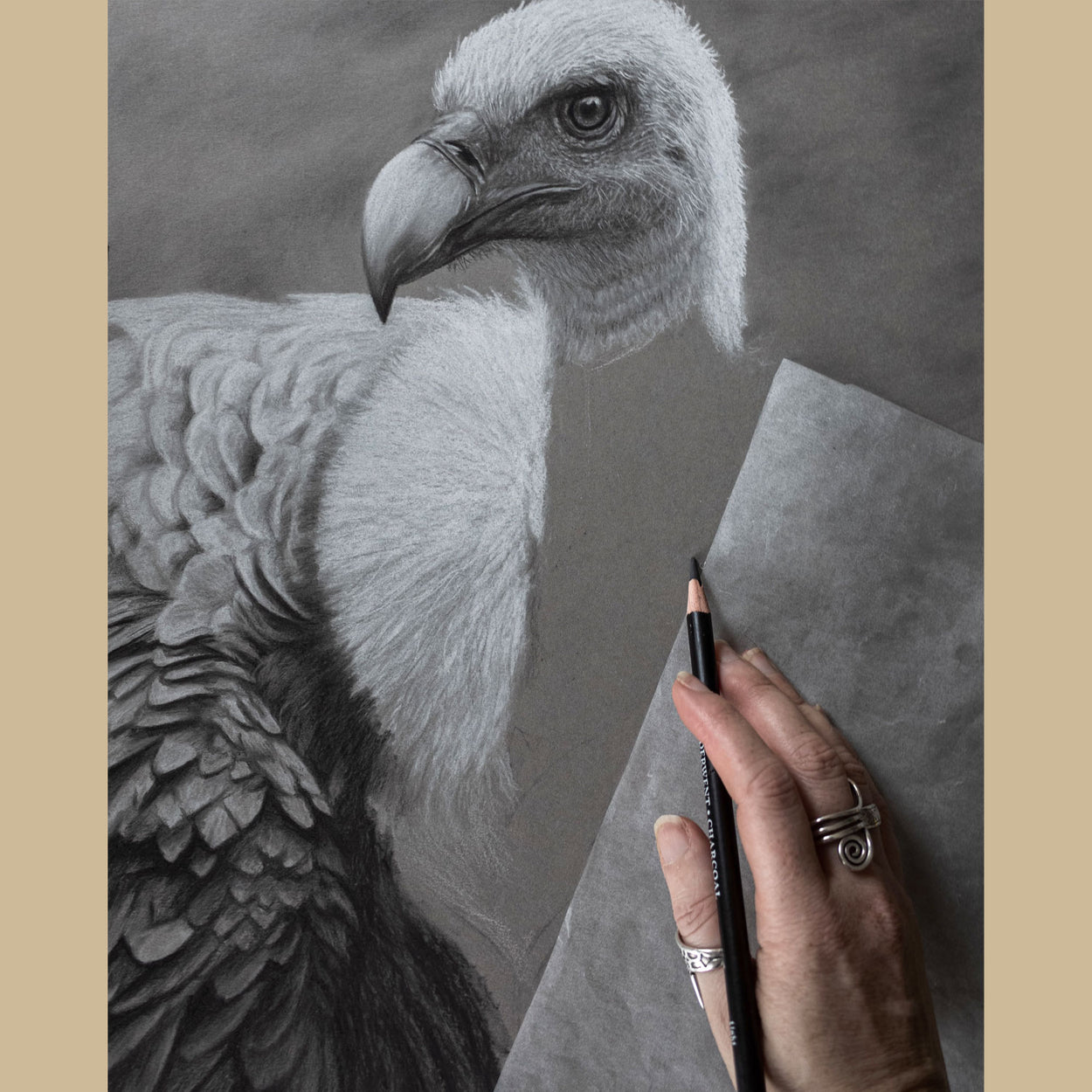 Griffon Vulture Drawing In Progress - Jill Dimond