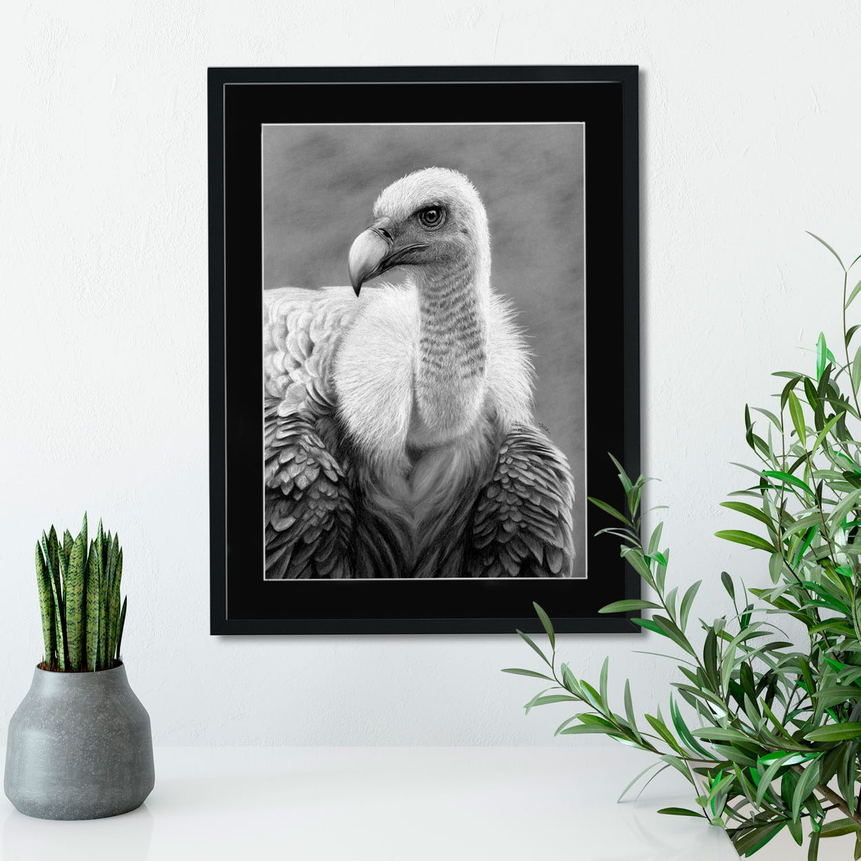 Griffon Vulture Drawing on Wall - The Thriving Wild - Jill Dimond