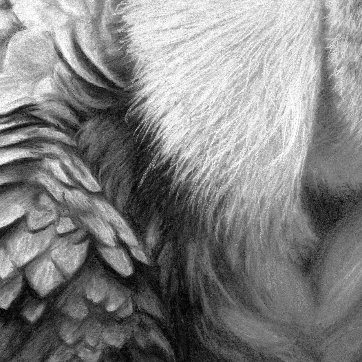 Griffon Vulture Feathers Close-up 2 - Jill Dimond