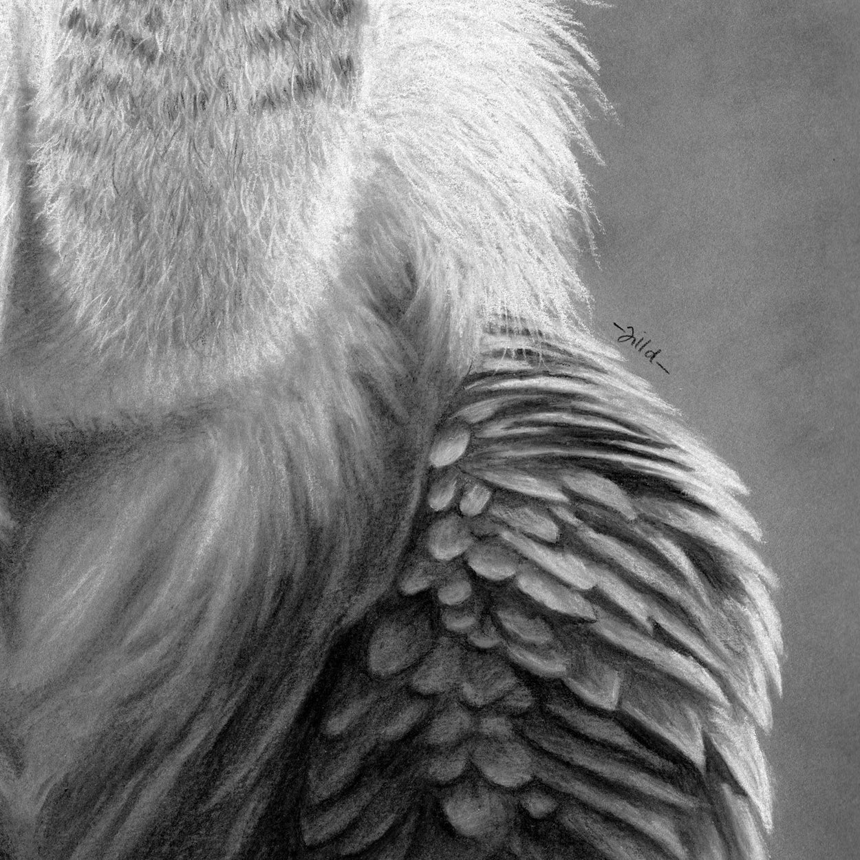Griffon Vulture Feathers Close-up 3 - Jill Dimond