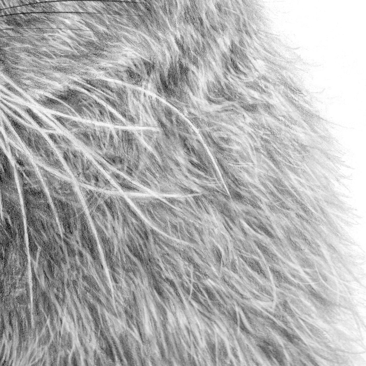 Hare Drawing -Close-up Fur - The Thriving Wild