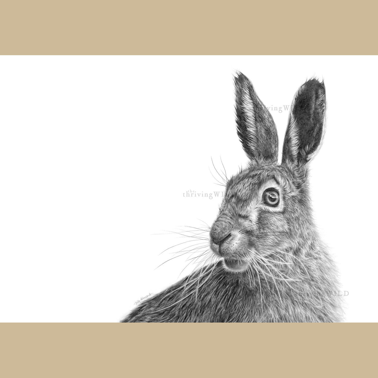 Hare Pencil Drawing Art Print - The Thriving Wild - Jill Dimond