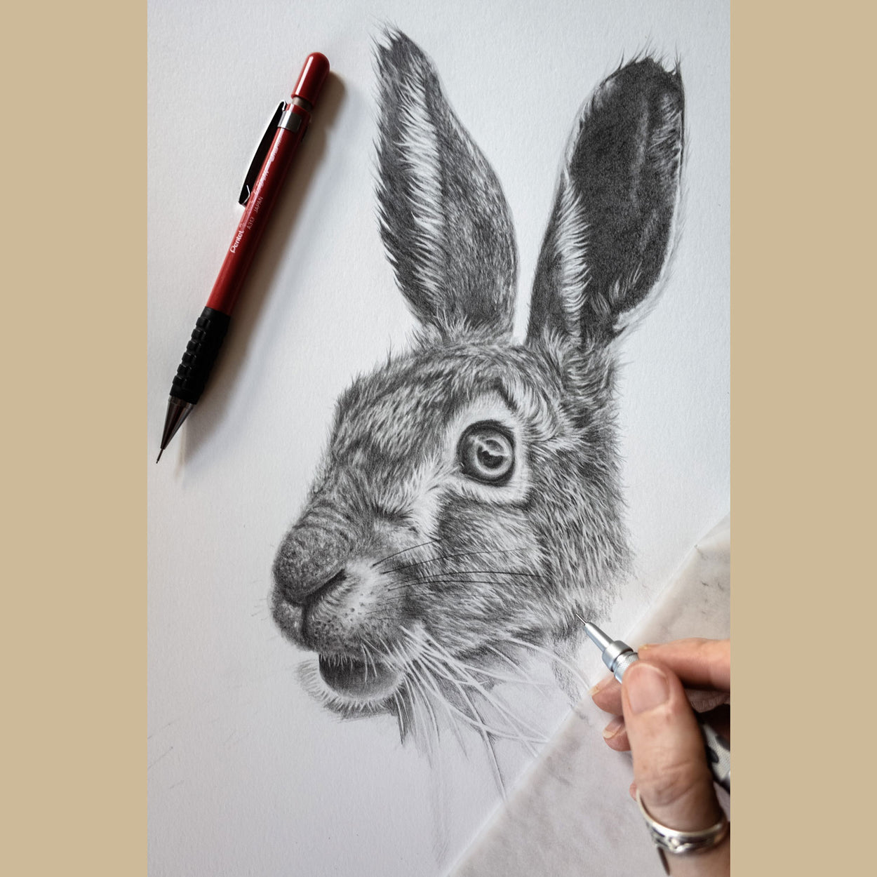 Hare Pencil Drawing in Progress - The Thriving Wild