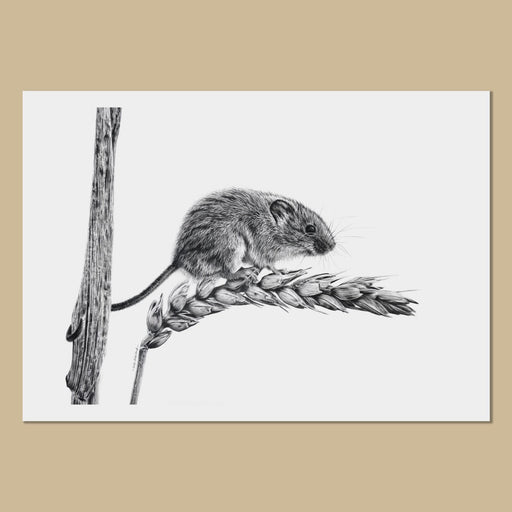 Harvest Mouse Art Prints - The Thriving Wild