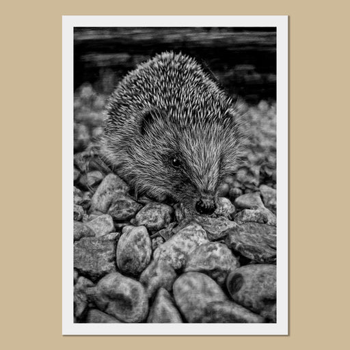 Hedgehog Art Prints - The Thriving Wild