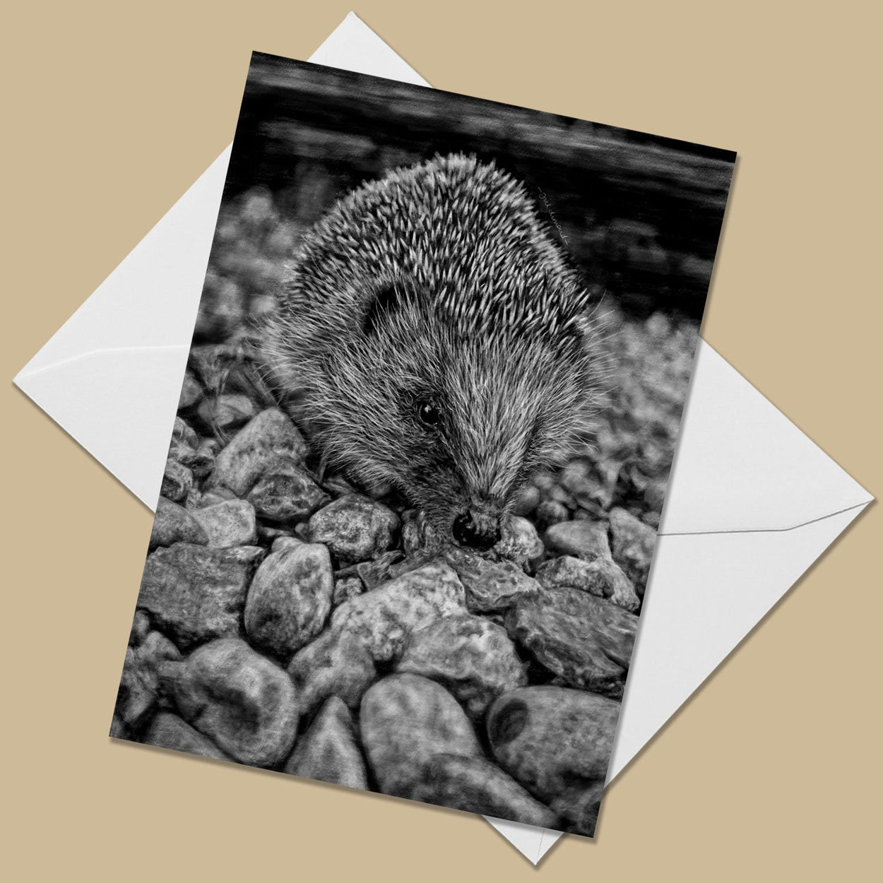 Hedgehog Greeting Card - The Thriving Wild