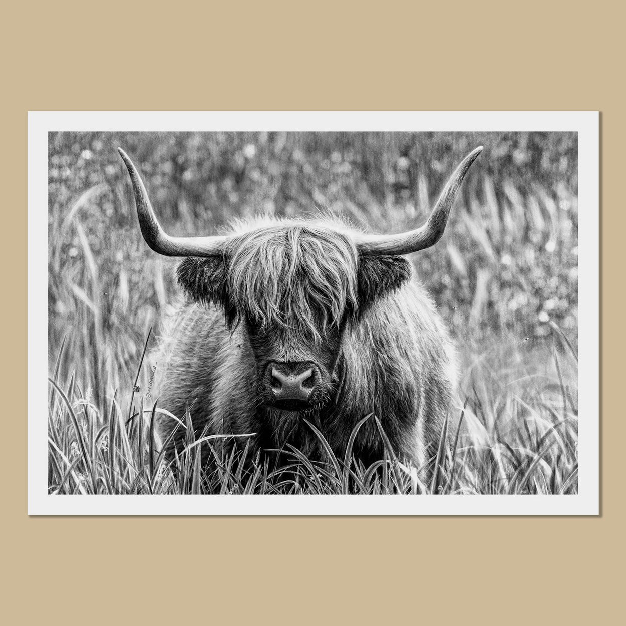 Highland Cow Art Prints - The Thriving Wild