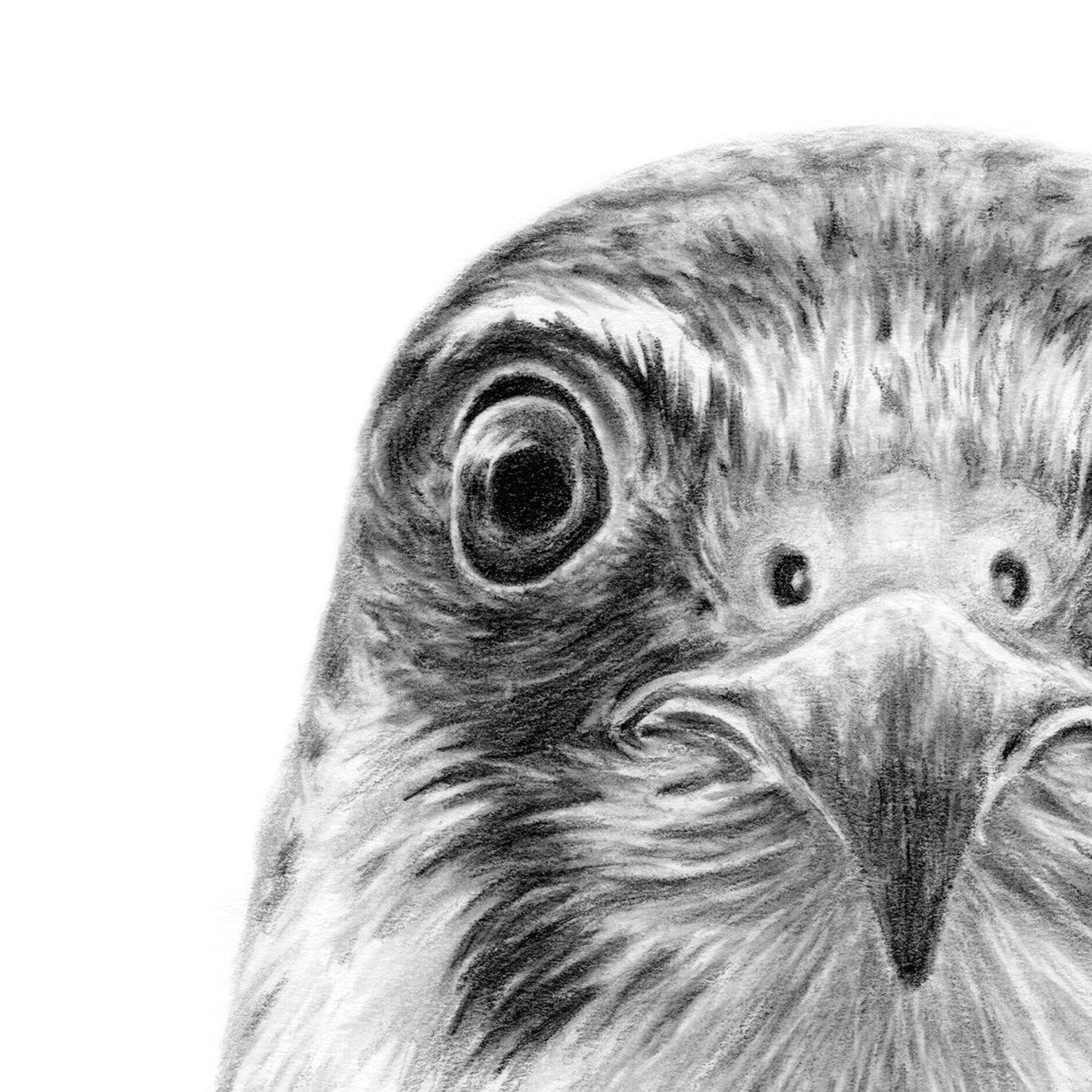 Hobby Drawing Close-up 1 - The Thriving Wild