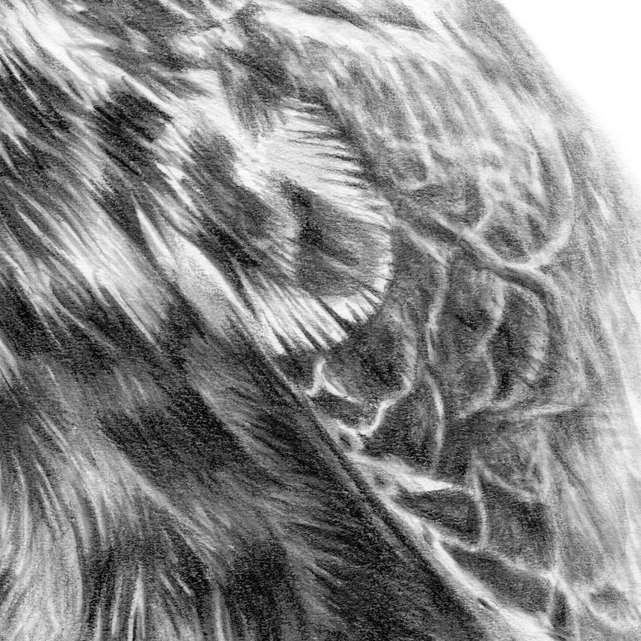 Hobby Feathers Drawing Close-up - The Thriving Wild