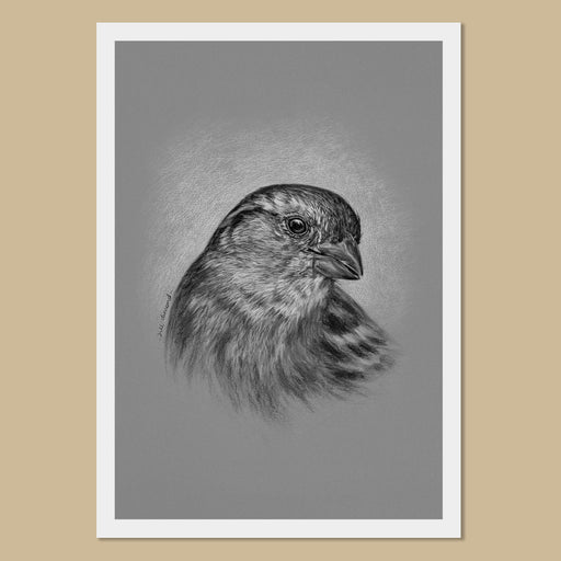 House Sparrow Art Prints - The Thriving Wild - Jill Dimond