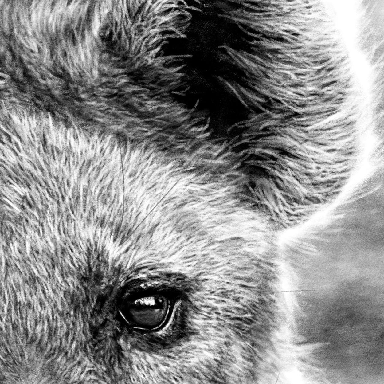 Hyena Drawing Close-up - The Thriving Wild