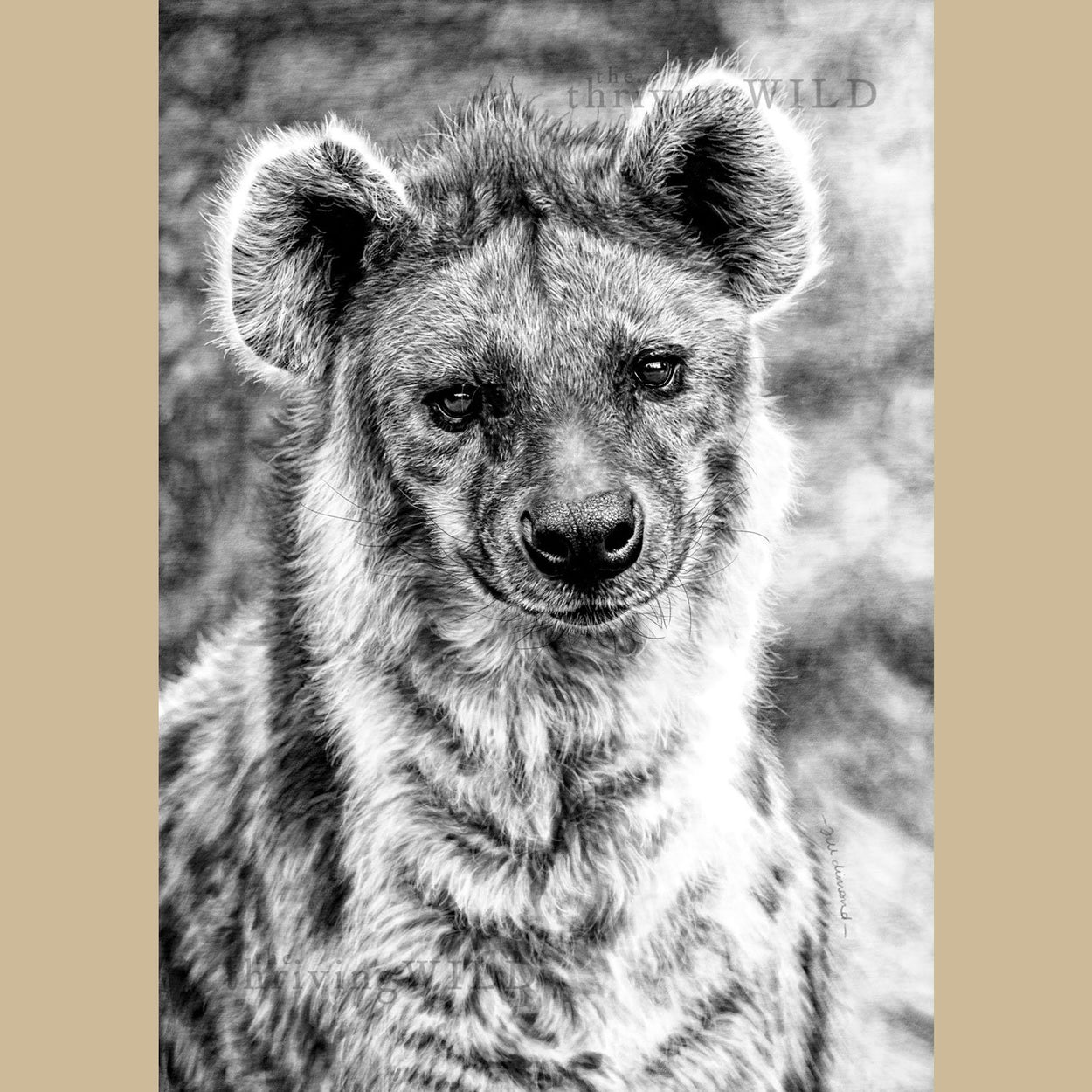 Hyena Wildlife Digital Drawing Procreate - The Thriving Wild