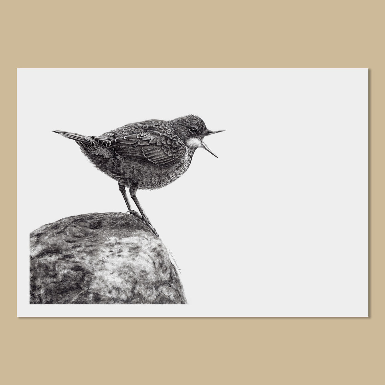Juvenile Dipper Art Prints - The Thriving Wild
