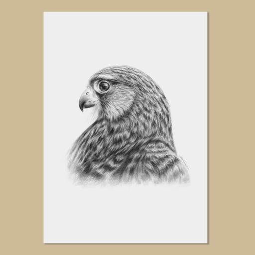 Kestrel Art Prints - The Thriving Wild - Jill Dimond