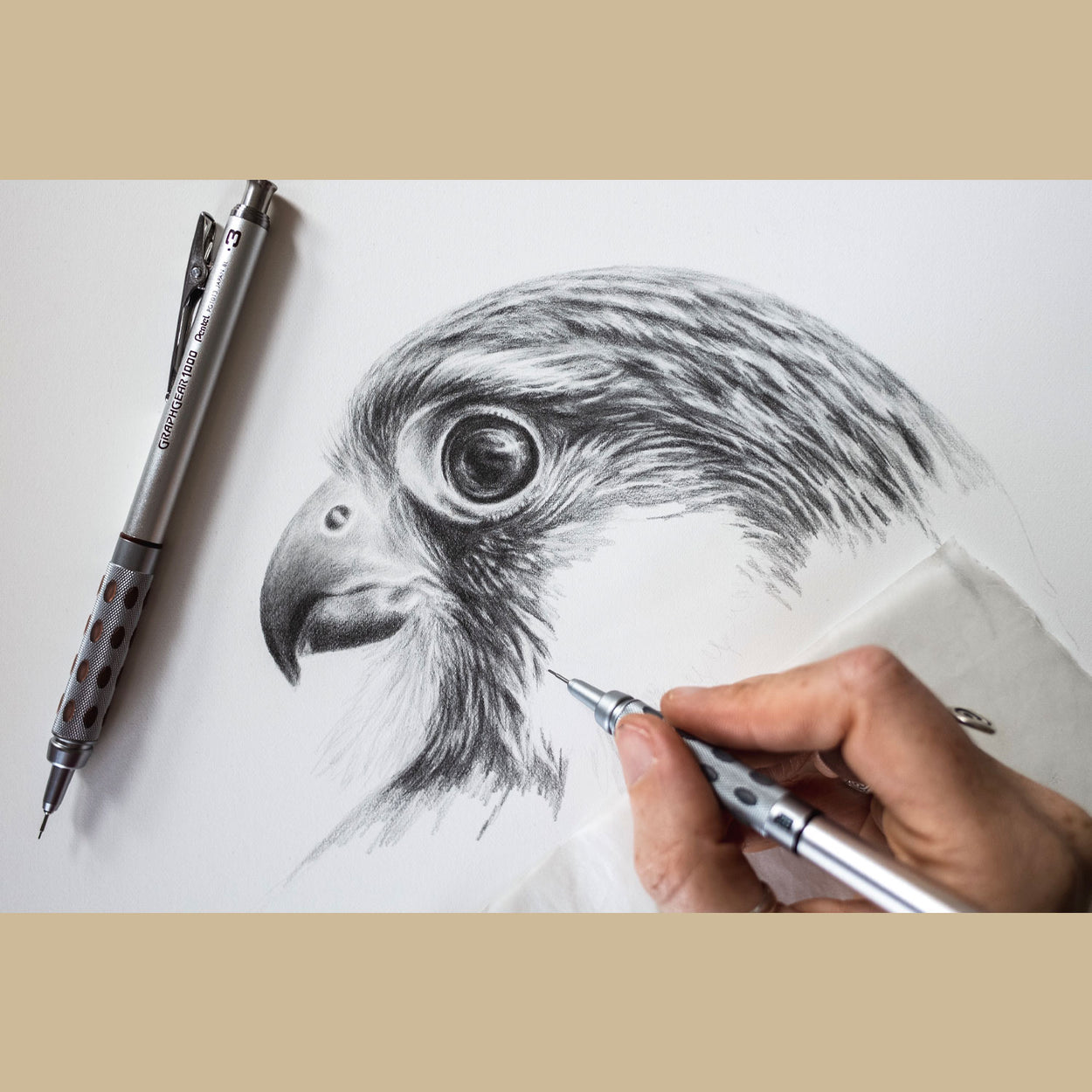 Kestrel Bird of Prey Drawing in Progress - The Thriving Wild - Jill Dimond