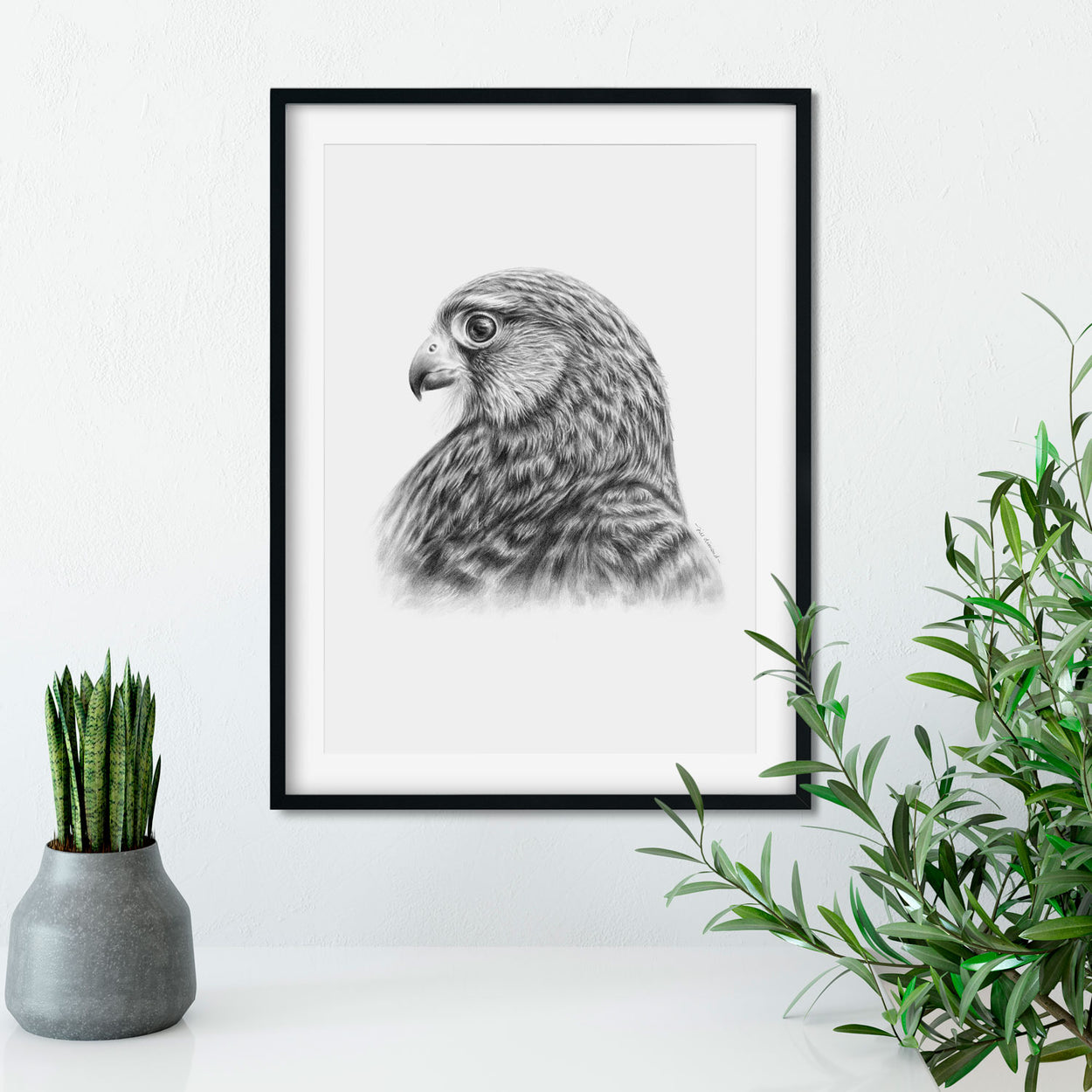 Kestrel Drawing in Frame on Wall - The Thriving Wild