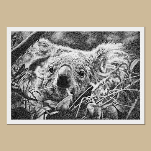 Kiri the Koala Art Prints - The Thriving Wild