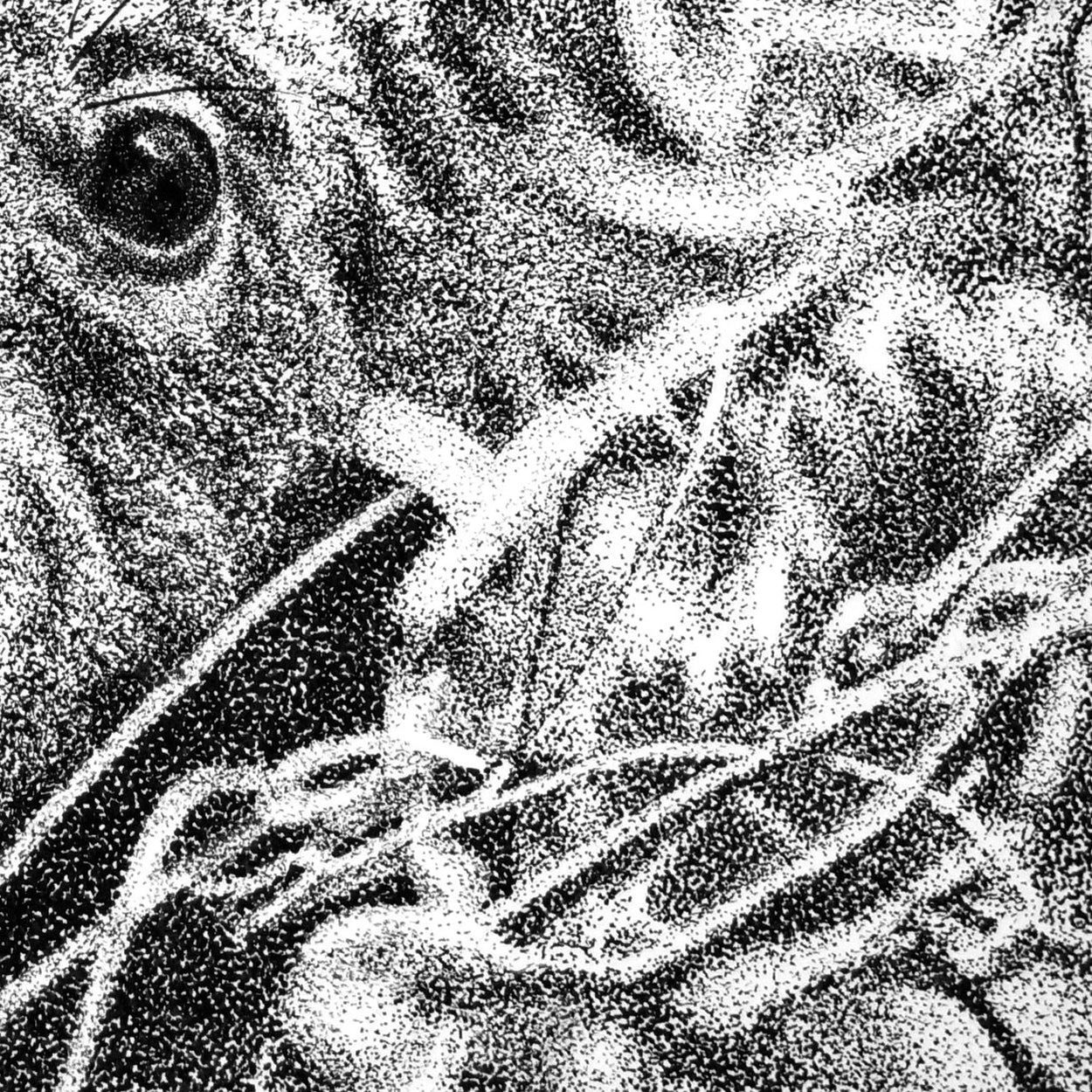 Koala Pen Stippling Close-up - The Thriving Wild