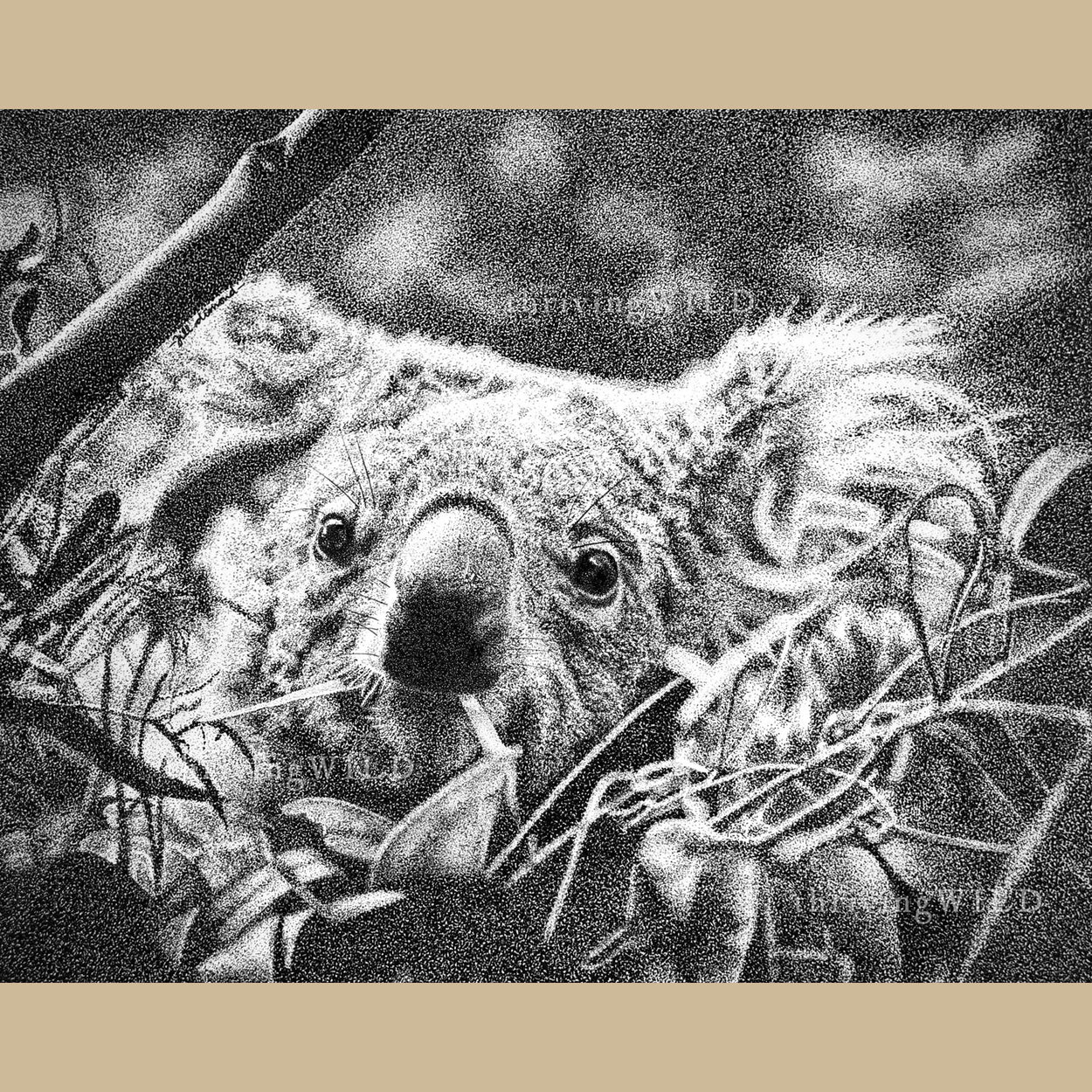 Koala Pen Stippling Drawing Wildlife - The Thriving Wild