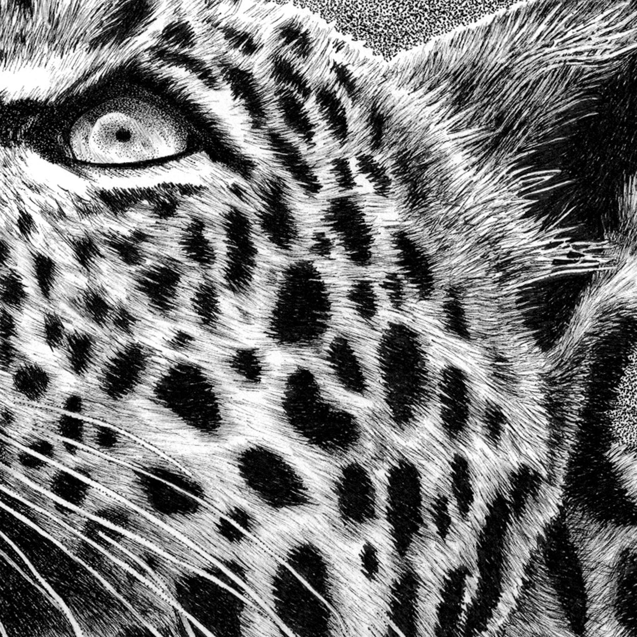 Leopard Pen Drawing Close-up - The Thriving Wild