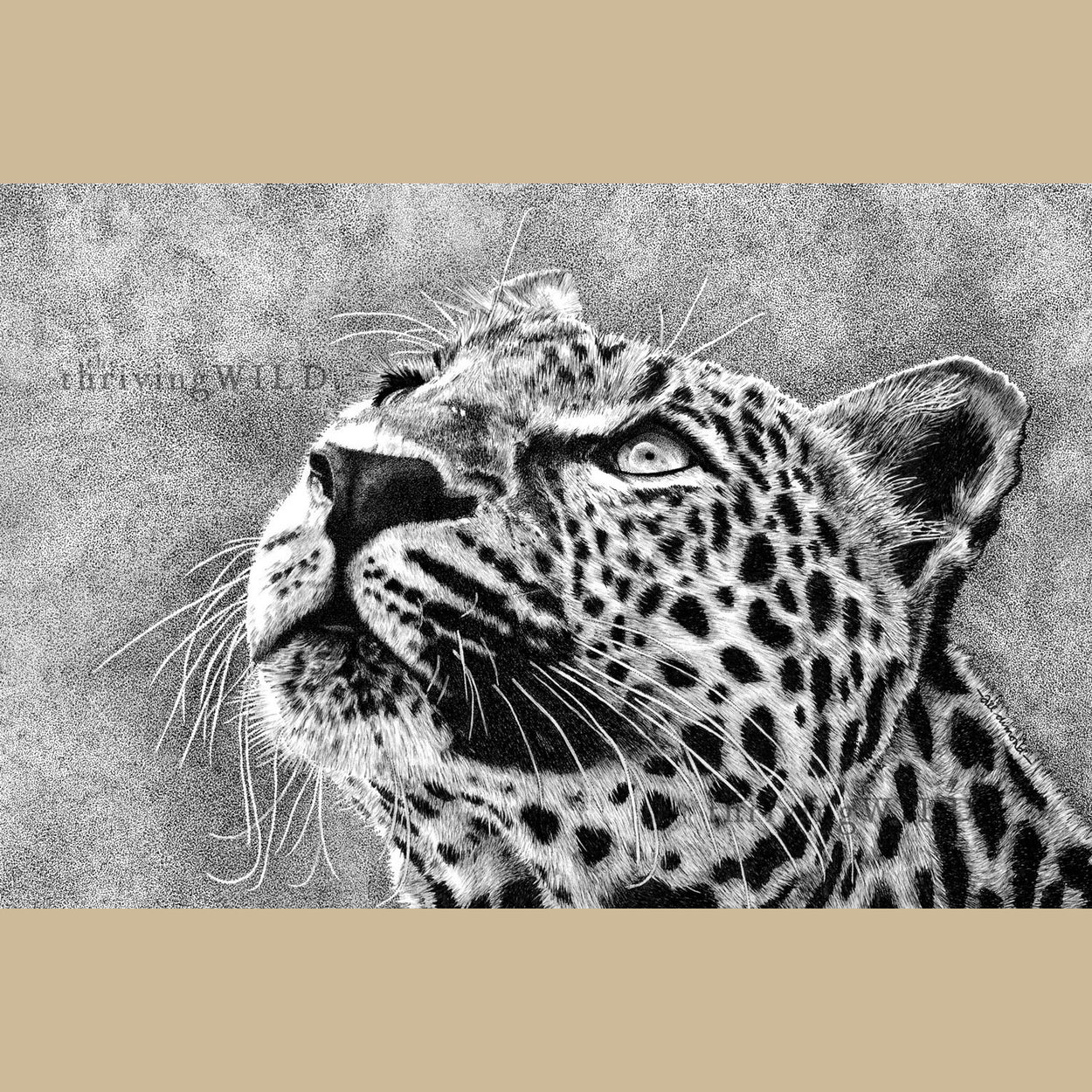 Leopard Pen Drawing Wildlife - The Thriving Wild