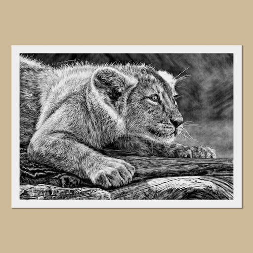 Lion Cub Art Prints - The Thriving Wild