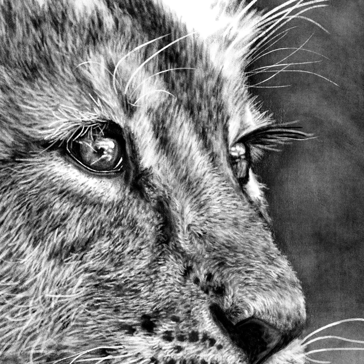 Lion Cub Digital Drawing Close-up - The Thriving Wild