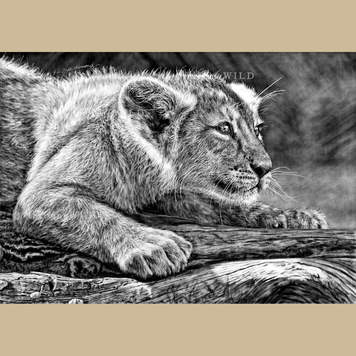 Lion Cub Digital Procreate Drawing Wildlife - The Thriving Wild
