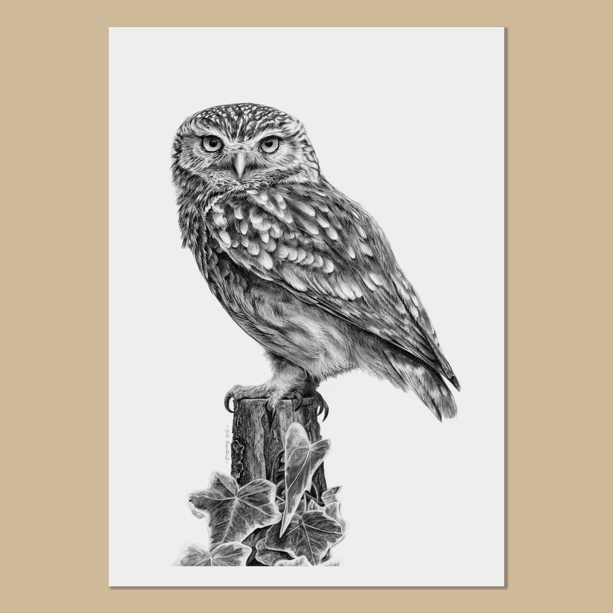 Little Owl Art Prints - The Thriving Wild