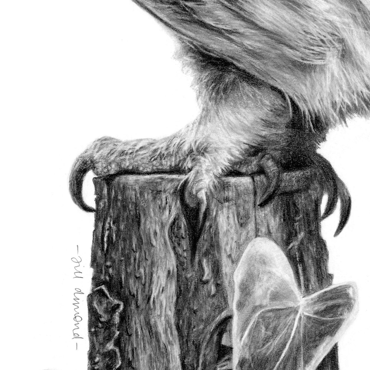 Little Owl Drawing Foot Close-up - The Thriving Wild