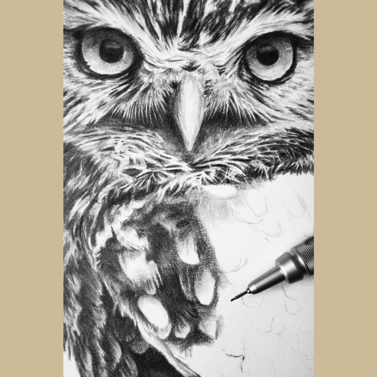 Little Owl Graphite Drawing Bird - The Thriving Wild