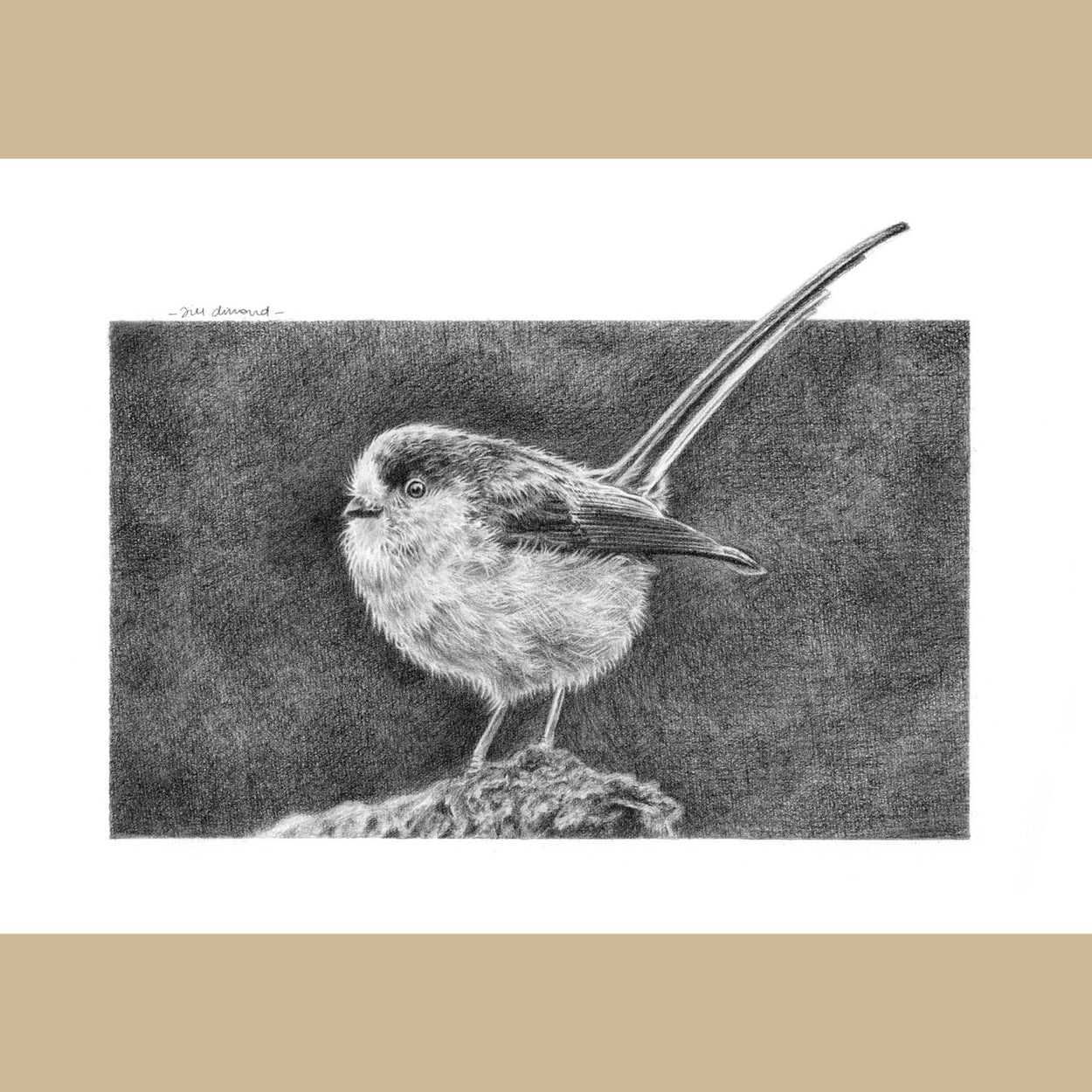 Long-Tailed Tit Bird Drawing - The Thriving Wild - Jill Dimond