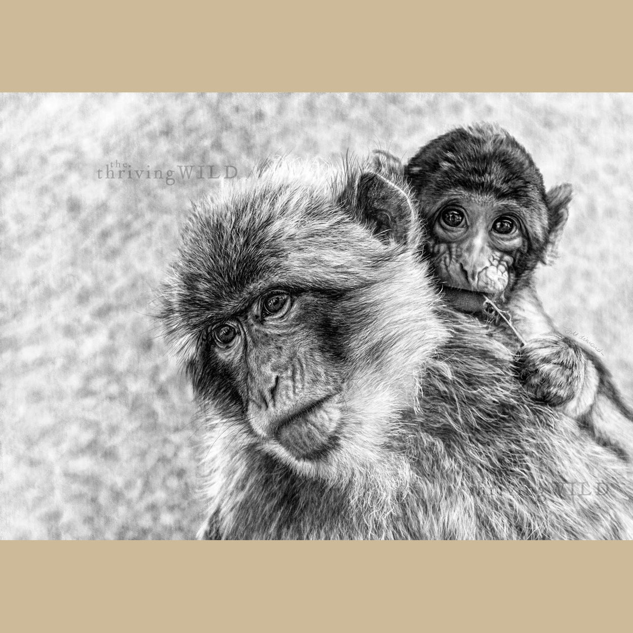 Macaques Mother & Baby Digital Drawing - The Thriving Wild