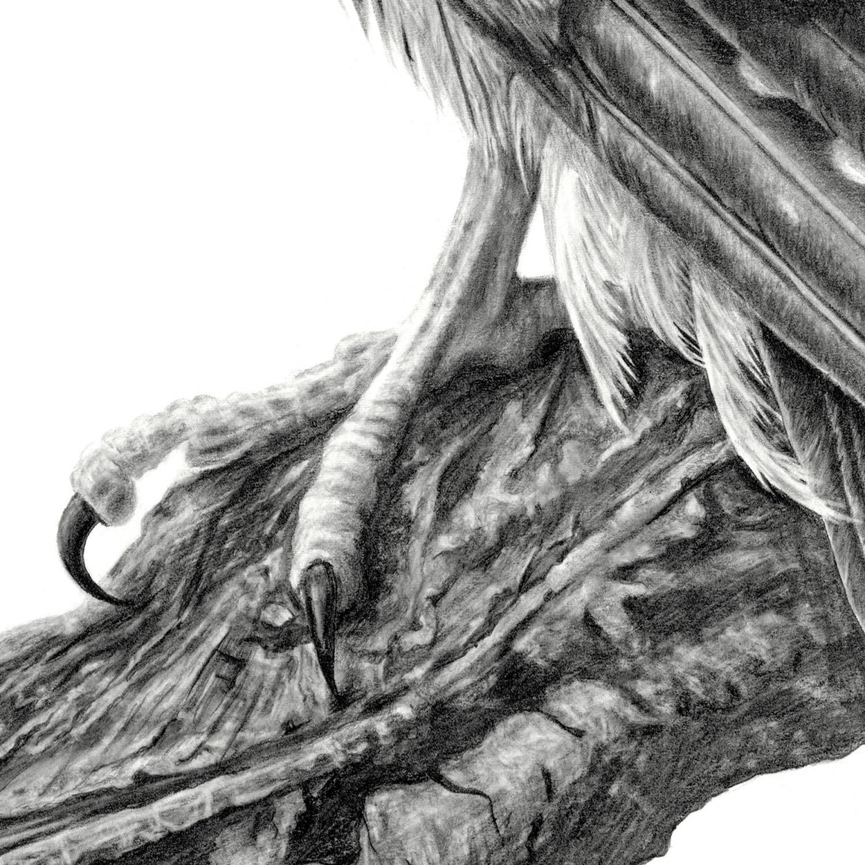 Merlin Bird of Prey Foot Close-up Drawing - The Thriving Wild
