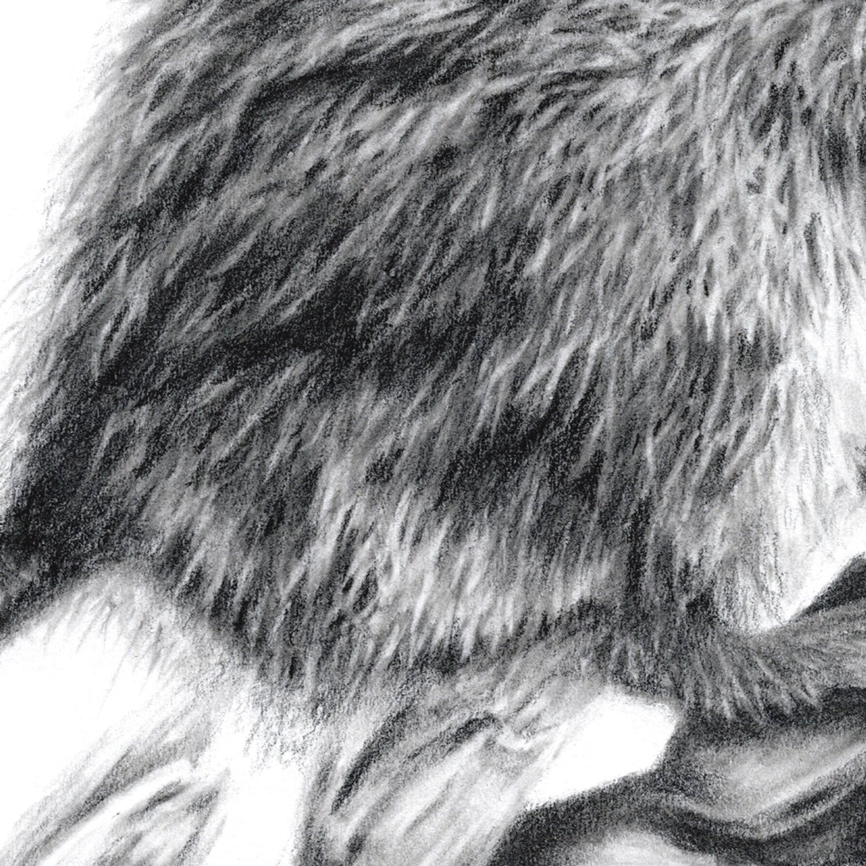 Mouse Drawing Close-up - The Thriving Wild