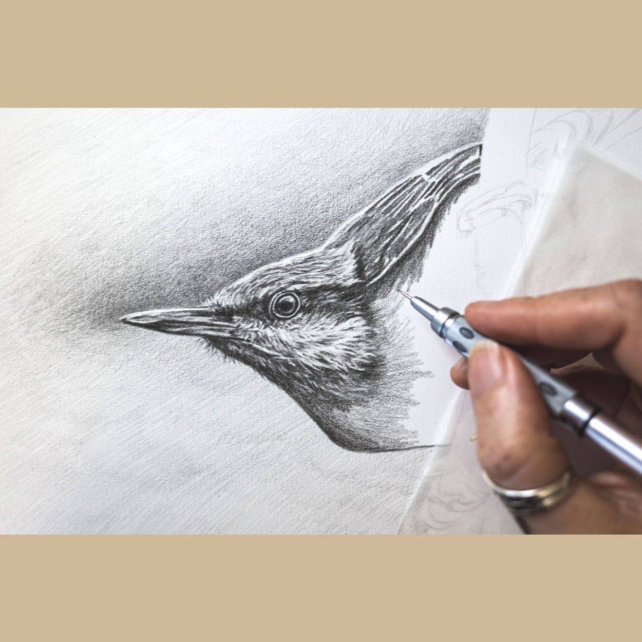 Nuthatch progress photo pencil drawing - The Thriving Wild