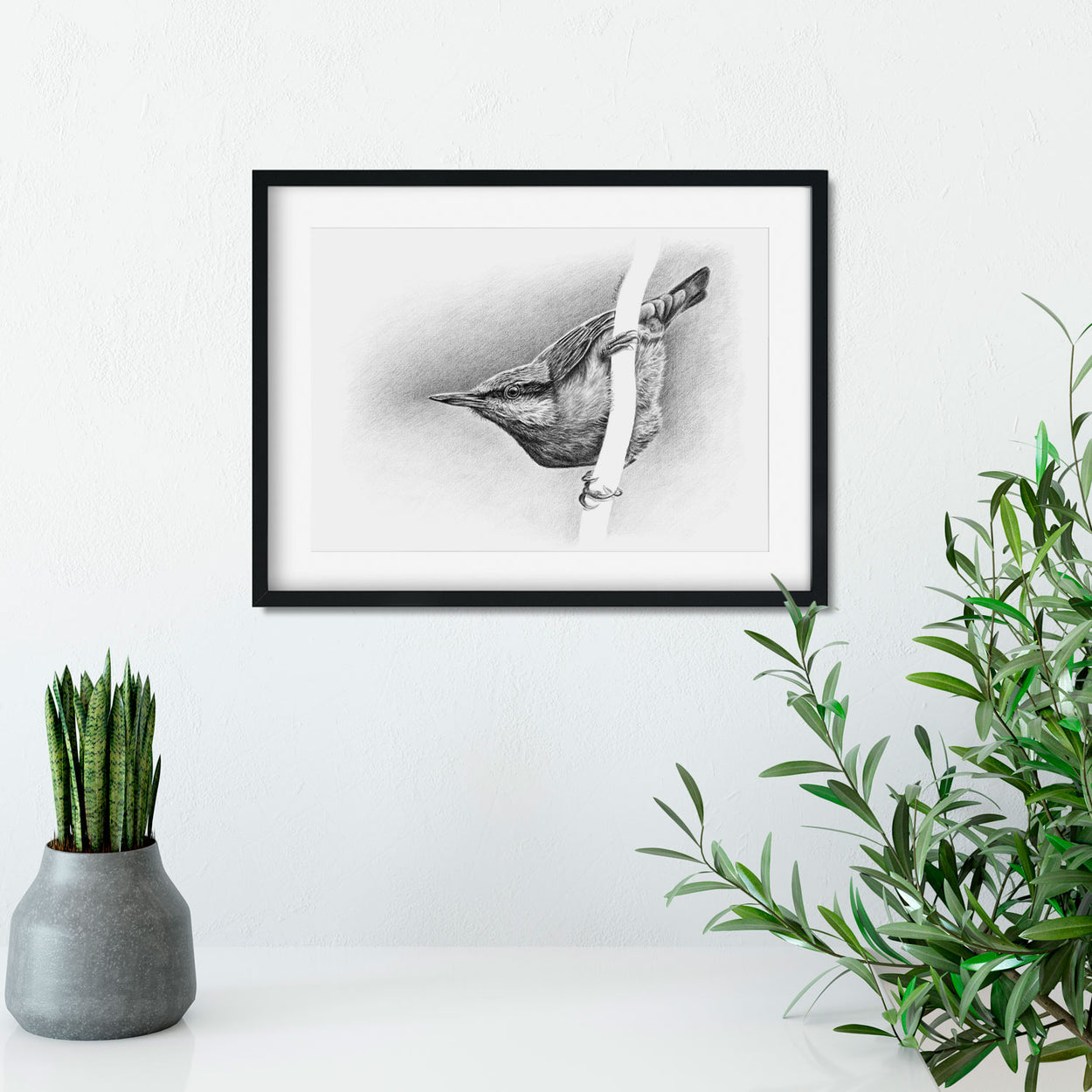 Nuthatch Drawing Frame on Wall - The Thriving Wild