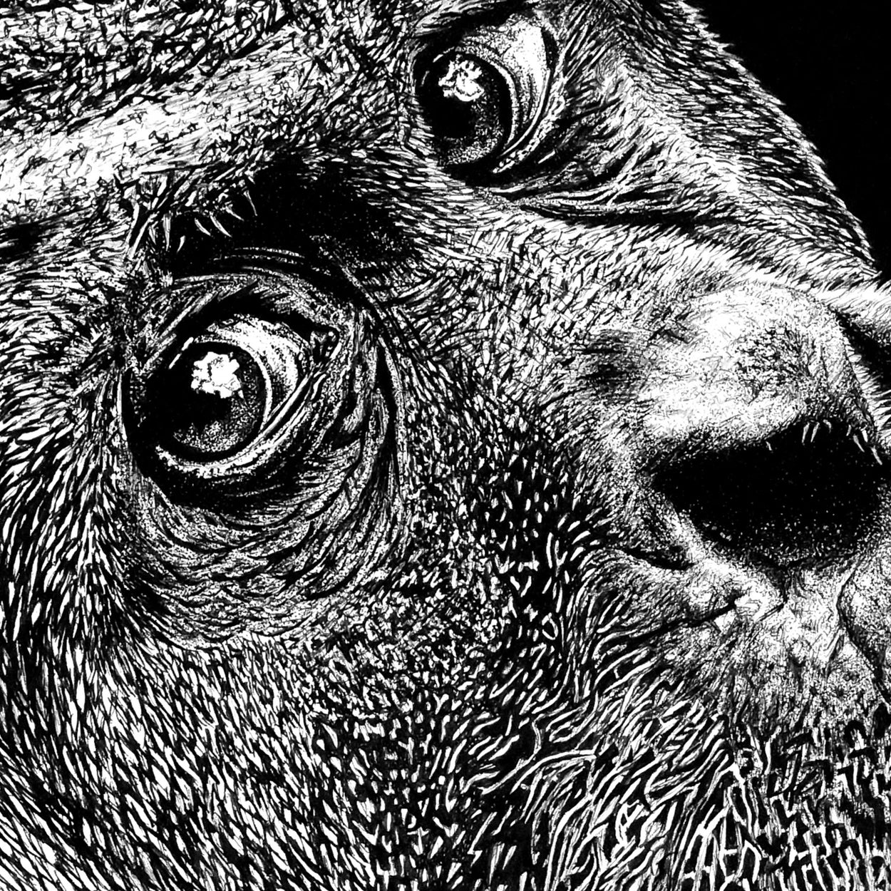 Orangutan Pen Drawing Close-up - The Thriving Wild