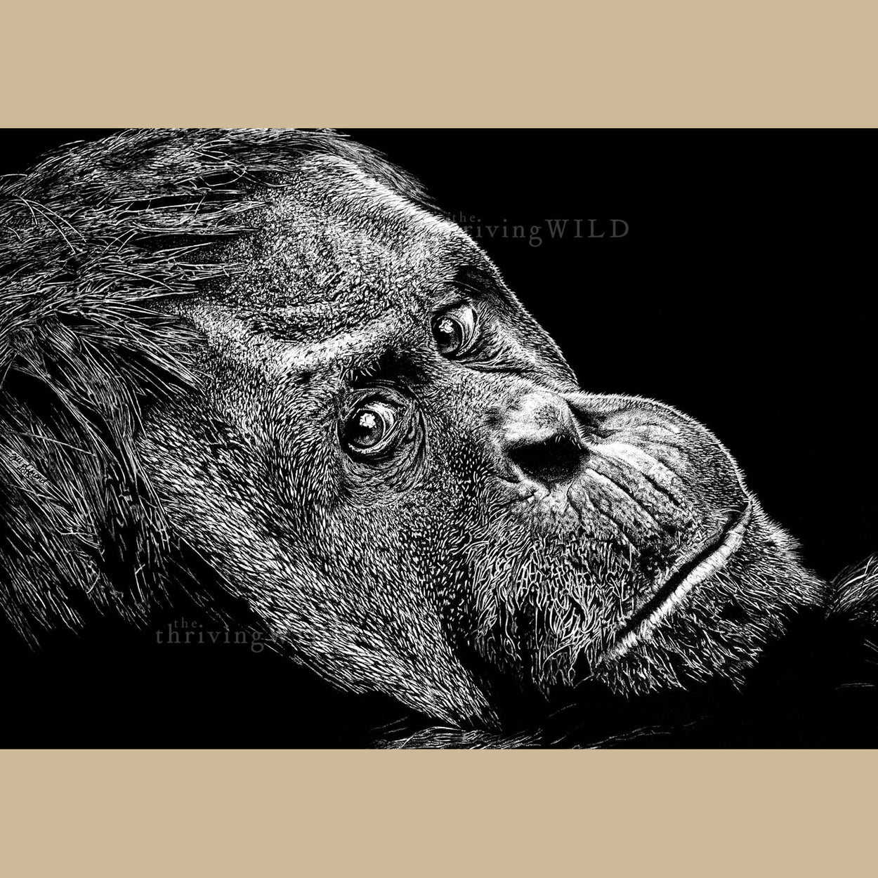 Orangutan Wildlife Pen Drawing - The Thriving Wild