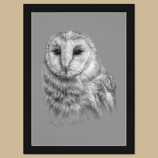Original Barn Owl Charcoal Drawing - The Thriving Wild