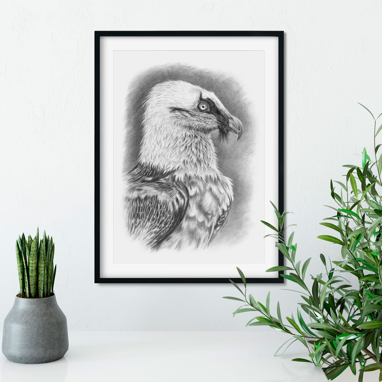 Original Bearded Vulture Lammergeier Drawing on Wall - The Thriving Wild