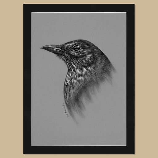 Original Blackbird Charcoal Drawing - The Thriving Wild - Jill Dimond
