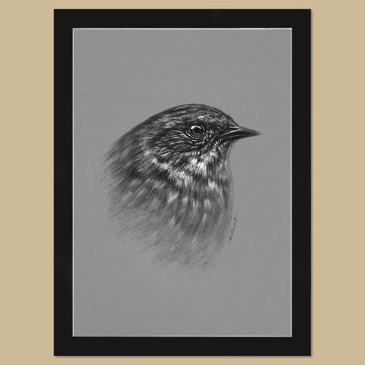 Original Dunnock Charcoal Drawing - The Thriving Wild