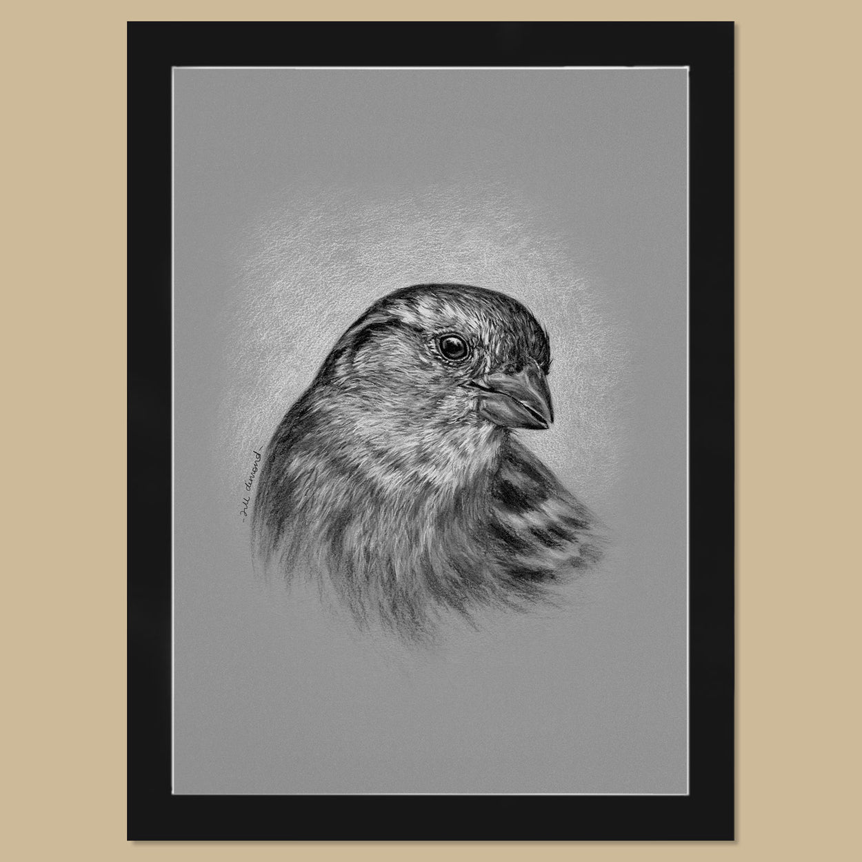 Original Female House Sparrow Charcoal Drawing - The Thriving Wild - Jill Dimond