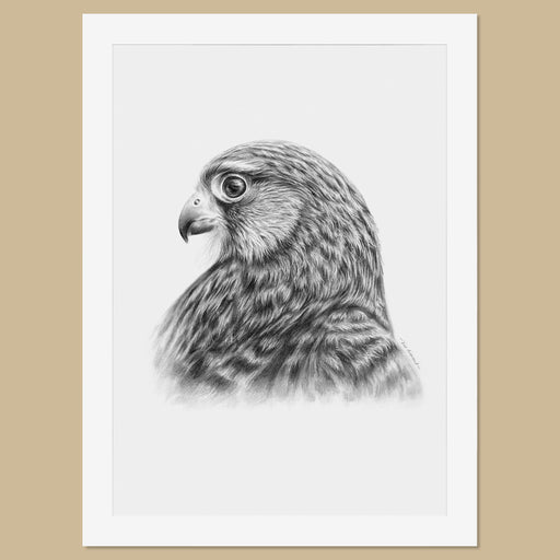 Original Female Kestrel Pencil Drawing - The Thriving Wild
